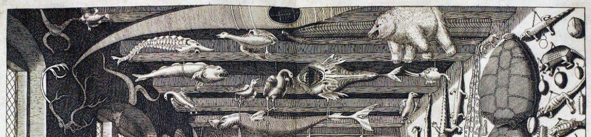 Cabinet des Curiodiversités